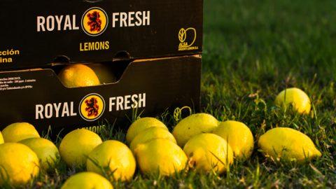 FreshPlaza: Overseas lemons & limes signal start of summer season at FMI